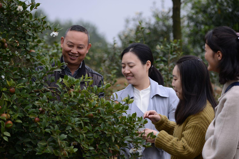 农技专家现场考察油茶树挂果情况.JPG